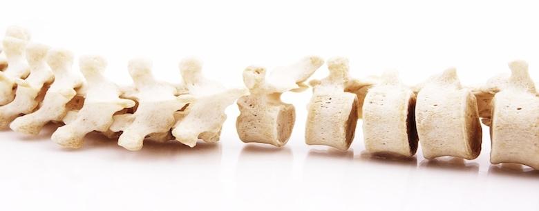 quiropractica columna