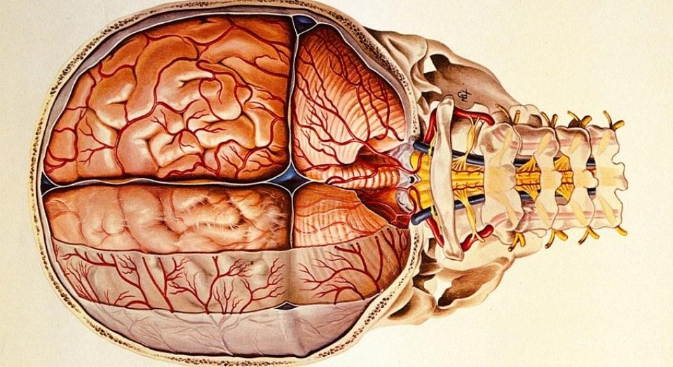 meníngeas fibromialgia y quiropráctica