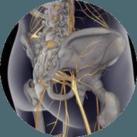 Ciatica nervioc ciatico quiropráctica